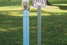 Kutyák minden mennyiségben - a Pinterestről!