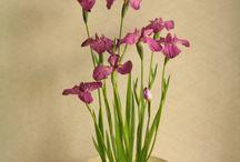 flores / Pequeños actos pueden cambiar la realidad que nos rodea !!!