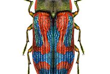 insect illustration nature science