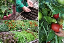 Growing  and caring for flowers,veges,and fruit / by Gail Chandler