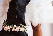 I nostri amici a quattro zampe alle nozze/ Wedding dogs / Idee per i cani al matrimonio/ Wedding day special guest: the dog!