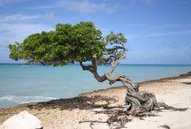 Aruba Photos
