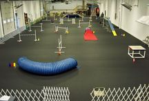 Dog indoor agility