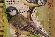 ptáci vv