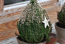 Christmas plantings