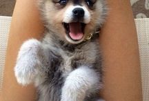 pupy!