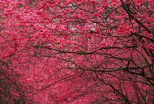beautiful pics / by Stephanie Zuckerman