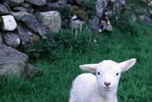 The Lord is My Shepherd  / by Debbie Lovette