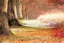 Tuin / Herfst