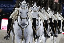 Riding Horses  in groups and teams / teams, groups, military formations