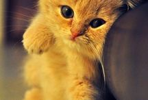 Really cute cat >.<