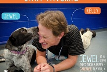Staff Favorites / Get to know our AHS staff & their favorite adoptable animals!