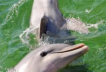 I want to swim with dolphins