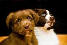 puppies / by Nicole Gaffney