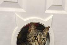 CATS_FURNITURE