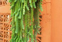 planta suculentas
