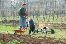 A Day in our Farm Life / Moments, people, animals, experiences and everything makes us happy here in Palazzetto Ardi!