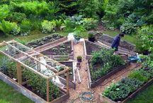Грядки и огород