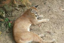 Parque Zoobotânico de Teresina / Videos