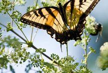 butterflies and dragonflies / by Diane Dunn