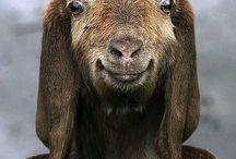 Wonderful animal photos
