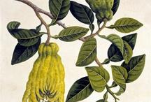 flora / botanica