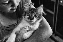 Veterinary medicine / Blogs I found interesting on veterinary medicine