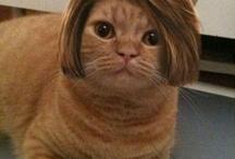 Cats-Dress Up
