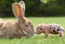 Animals / Cute and beautiful animals. Cuki és szép állatok.