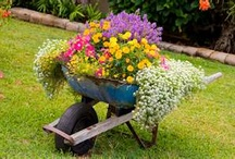 Lawn and Garden Ideas / by Holly Earhart