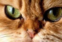 Cats. Cats. Cats.