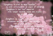 Blog : Zoveel Mooier.nl