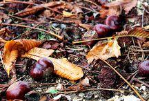Colori Autunno 2014 / I bellissimi Colori dell'Autunno 2014 presso Euro Plants Vivai.