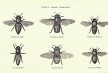 Bees / Bees, beautiful bees, where would we be without our bees?