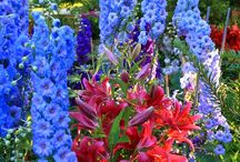 Flower Garden / by Kelly Stepp