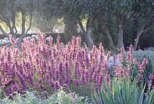 Dry Climate Gardening / Plants requiring minimal irrigation