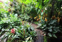 Rainforest garden ideas / Gardening