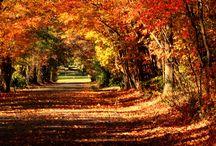 Fall & Winter - my two favorite seasons  / by Allison Newsom