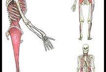 anatomy train