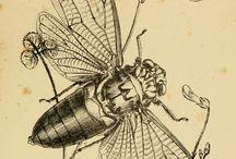 desen insecte