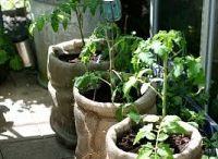 Vaso giardino