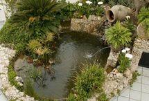jardins & suculentas