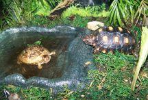 Želvy výběh