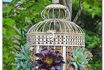 beautiful cage