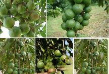 nut plants