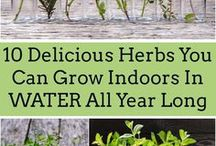 Herb Stuff