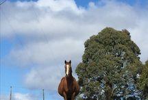 Hartpury Farm Australia