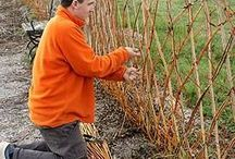 Fedge or Living Willow Fence