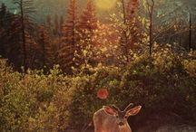 Deer & Squirrels & Foxes / by Susanna Delon