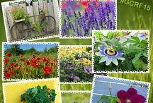 Fotowettbewerb #GCRF15 / #Fotowettbewerb mit #röttger  Gutschein gewinnen  Senden Sie uns Ihr schönstes Sommerblumenfoto und gewinnen einen Einkaufsgutschein über 300 €  Aktion bis zum 1.8.15